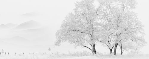 冬季雪松雪景banner背景