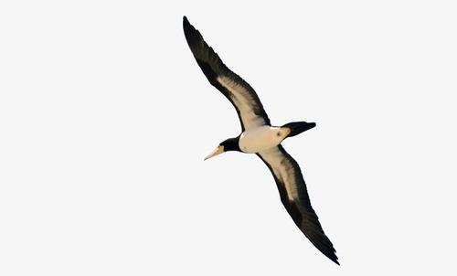 飞翔的鸟矢量图