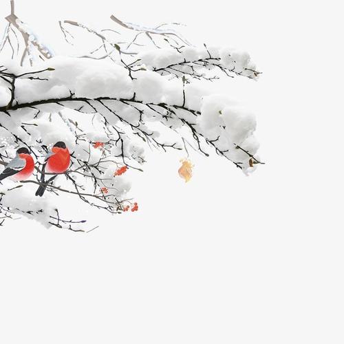小寒节气雪压树枝插画