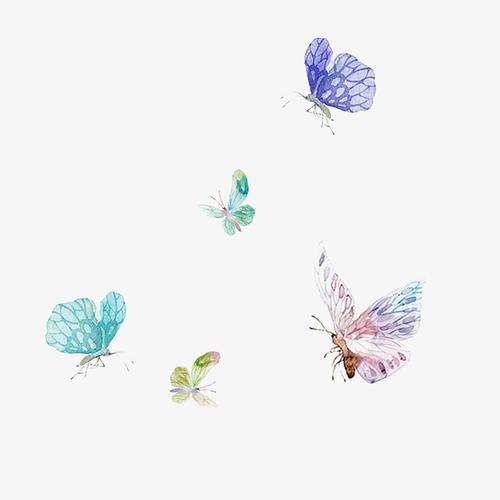 飞舞的彩色蝴蝶
