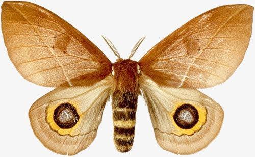 蝴蝶实拍图