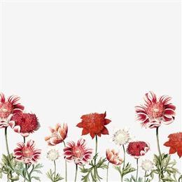 小清新花卉壁纸