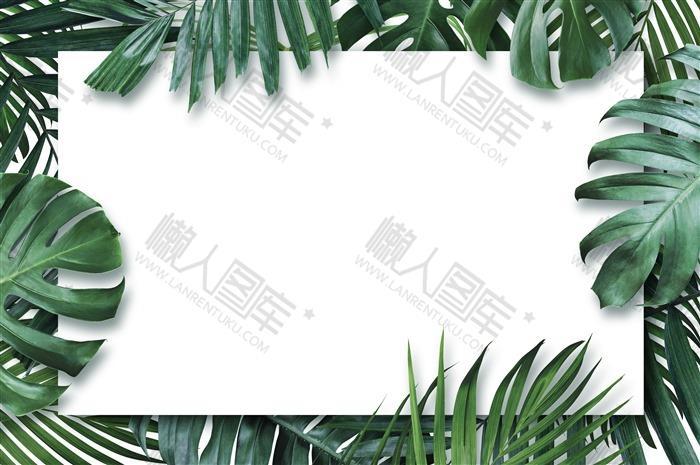 绿色棕榈叶装饰边框背景图