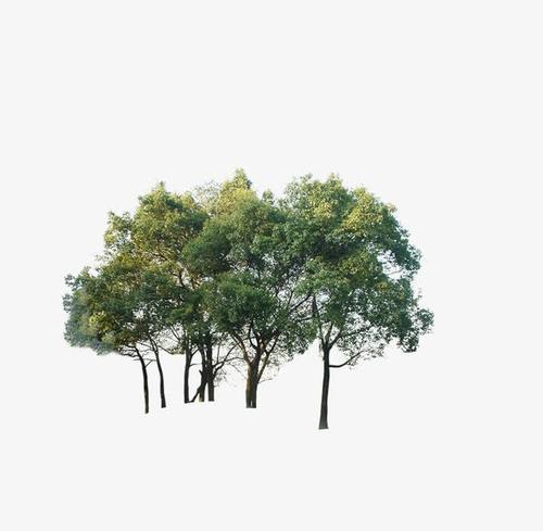 树木摄影作品