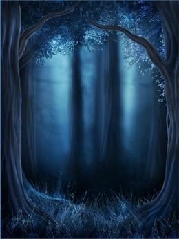 夜晚森林图片