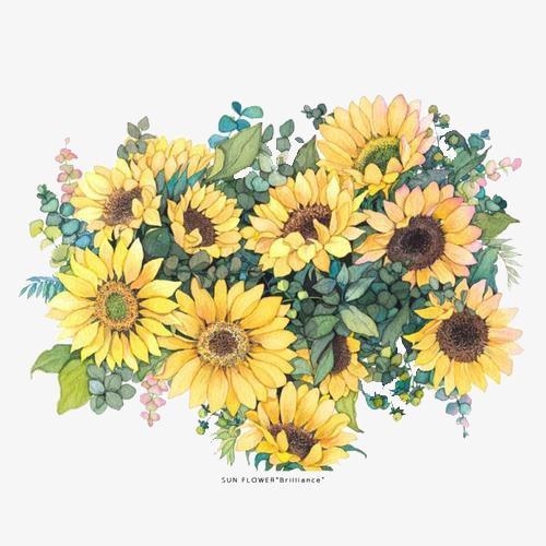 向日葵水彩画