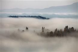云雾森林壁纸