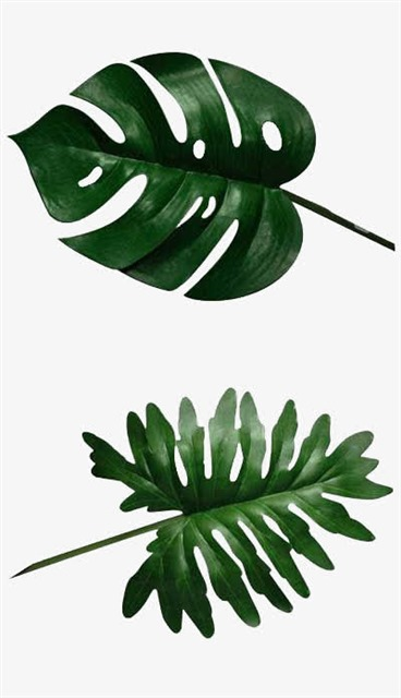 ins风植物叶子元素