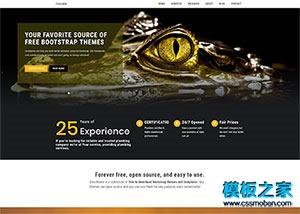 摄影艺术图库网站模板