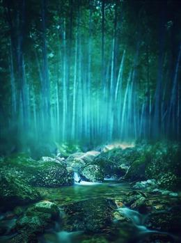 竹林小溪图片