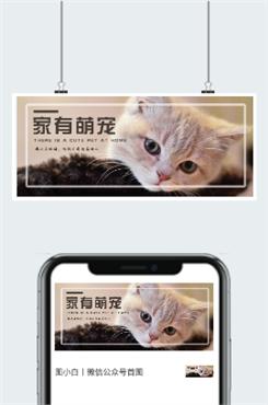 萌宠广告微信公众号图片