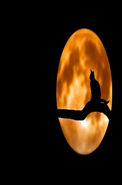 黑猫月夜光影摄影图片
