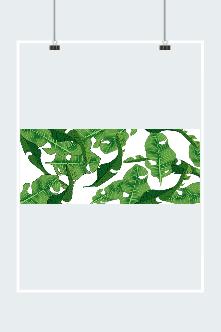 大暑芭蕉叶背景图片