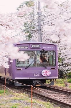 日系浪漫樱花背景图