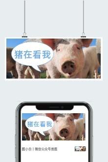 小猪搞怪公众号封面