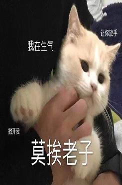 万能可爱猫咪表情包图片