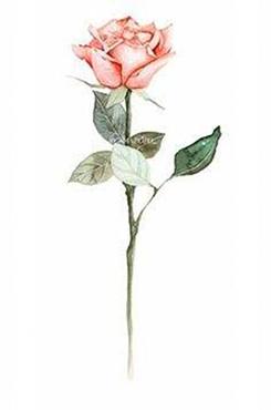 情人节玫瑰花矢量图