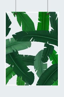 绿色芭蕉叶背景图片