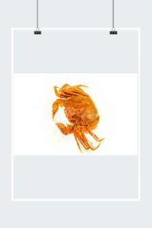 手绘大闸蟹图片
