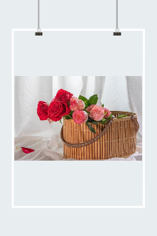 情人节玫瑰花真实高清图片