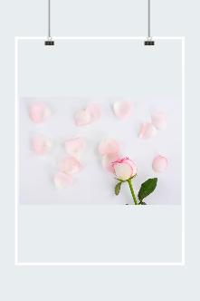 情人节玫瑰花瓣图片