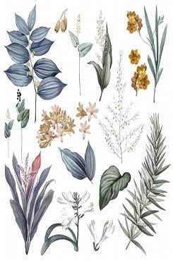 花草植物海报背景图片