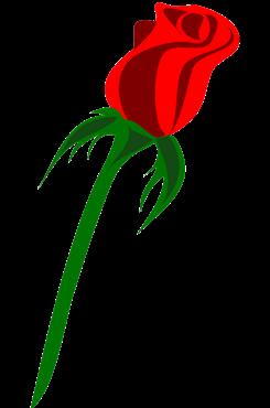 一束玫瑰矢量图片