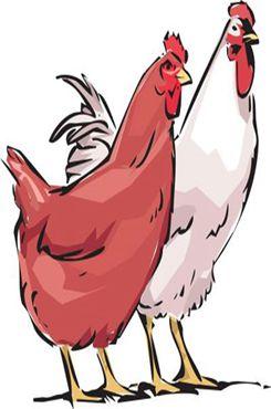 手绘母鸡矢量素材