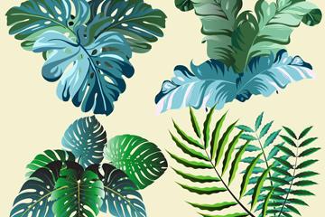 热带植物树叶矢量素材