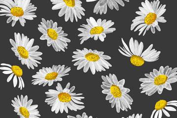 白色雏菊花朵无缝背景图片