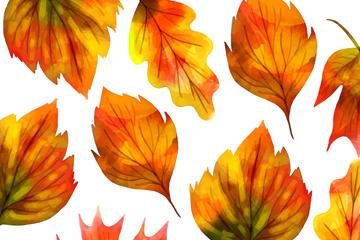 秋季树叶无缝背景图片