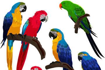 彩色鹦鹉免扣图片