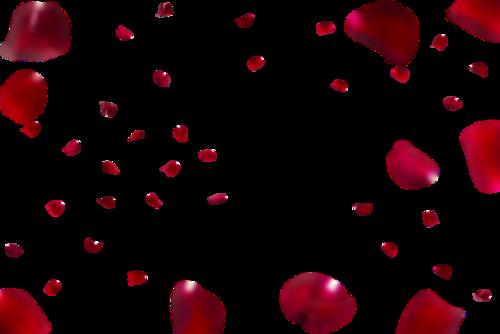 飞舞的红色玫瑰花瓣