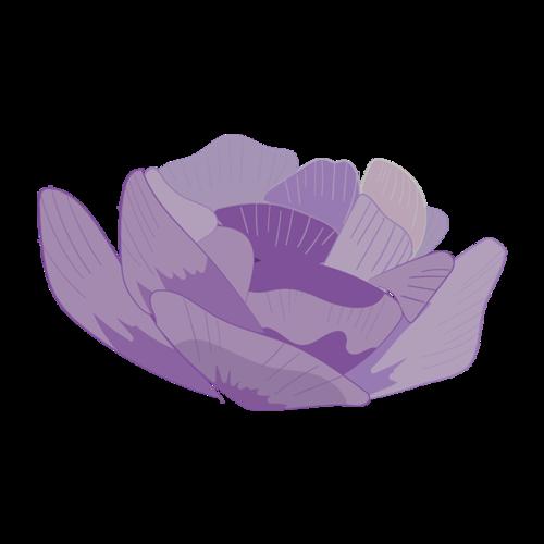 紫色花卉效果图