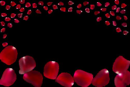玫瑰花瓣装饰插画
