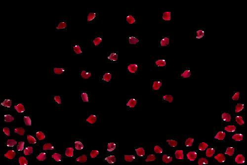 红色玫瑰花瓣图片