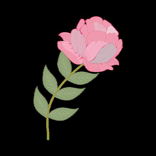 虞美人花卉素材