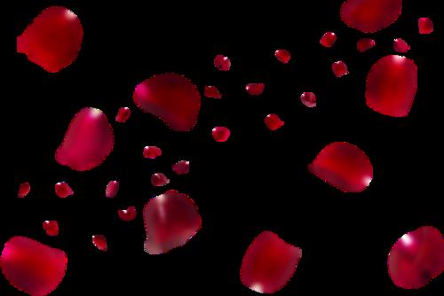 浪漫飞舞的玫瑰花图片