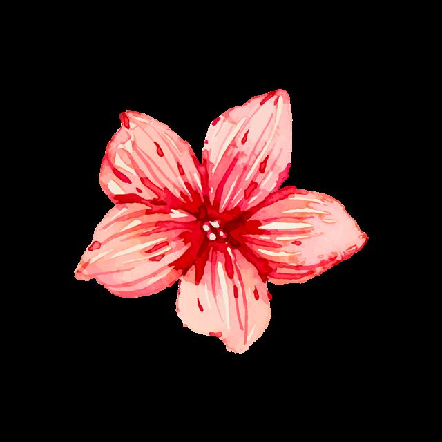 红色彩绘花朵图片