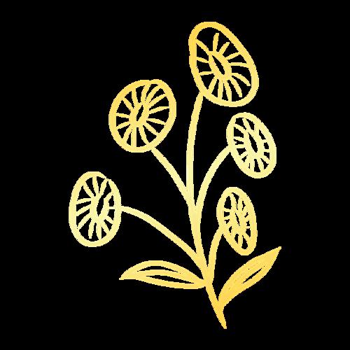 金边花朵素材