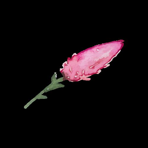创意水彩花卉图片