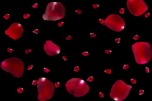 红玫瑰花瓣矢量图
