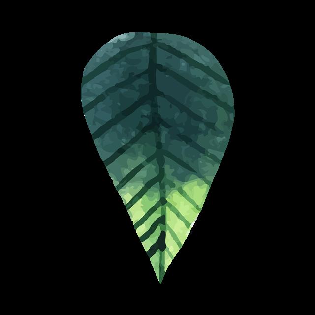 水彩热带绿叶图片