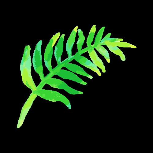热带植物树叶图片