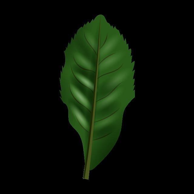 热带植物叶子