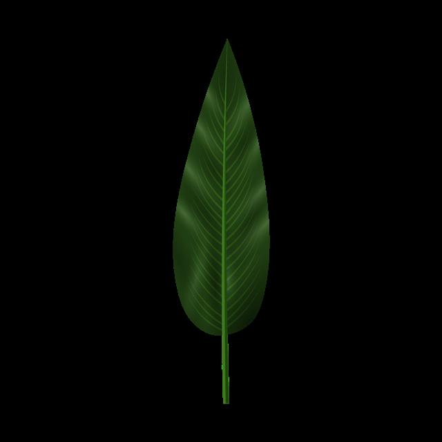 热带绿色叶子