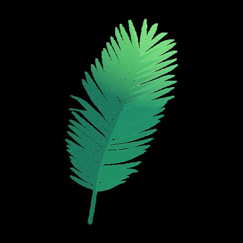 绿色羽毛矢量图