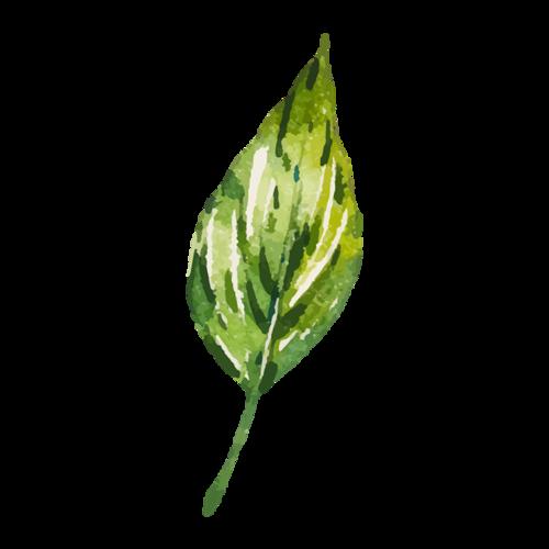 水彩树叶画