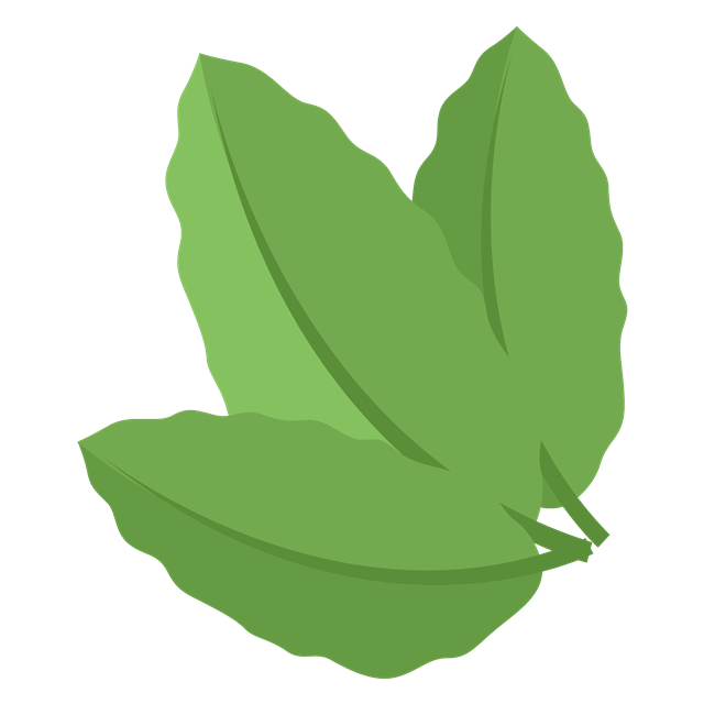 手绘绿色叶子