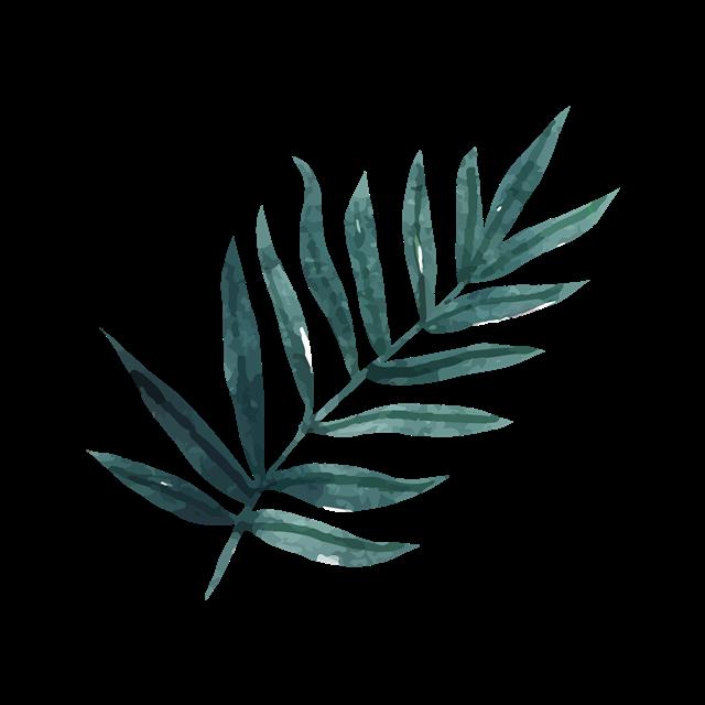 热带植物棕榈叶图片